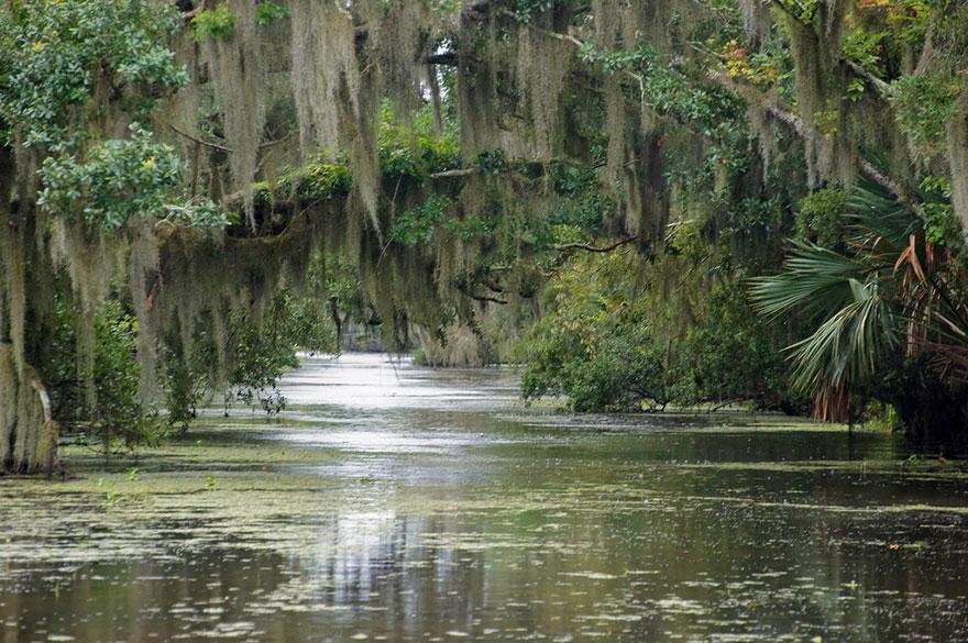 A hercegnő és a béka – Louisiana mocsarak, USA