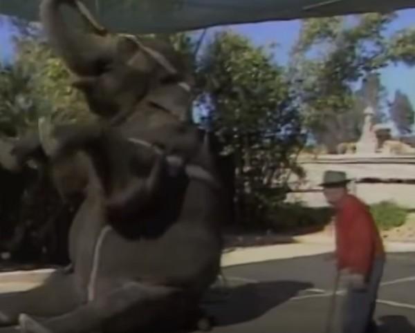 elefánttalálkozás1