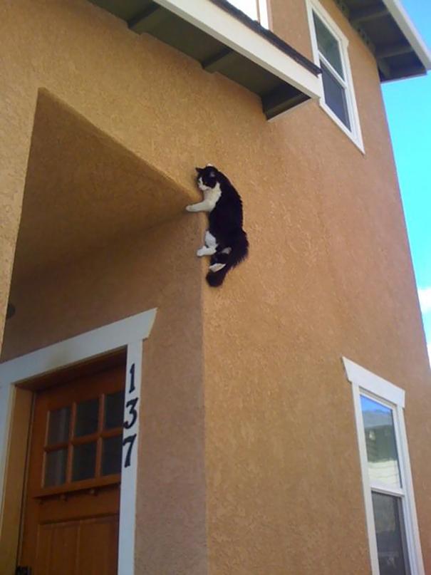 funny-cat-fails-28__605