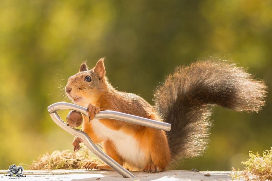i-shoot-squirrels-in-my-backyard-and-i-can-almost-make-a-living-from-what-i-love-10__880