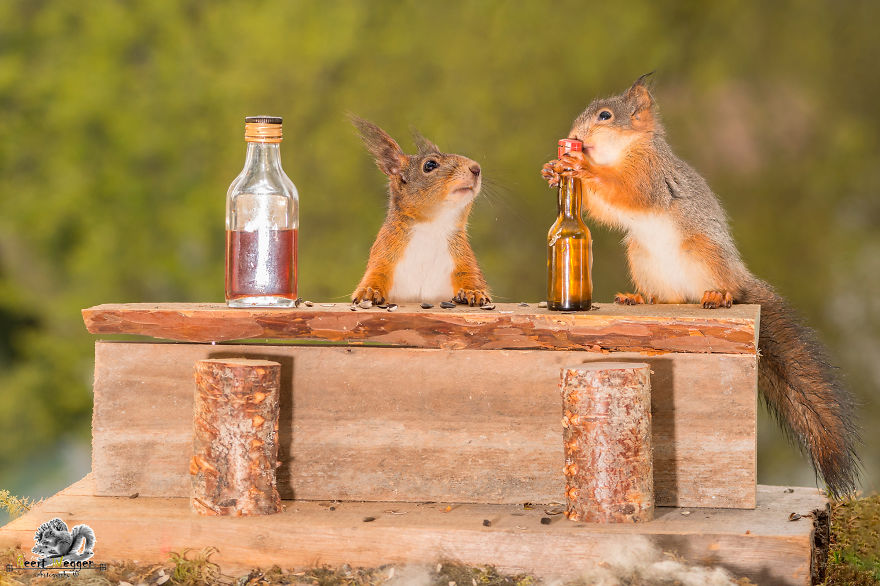 i-shoot-squirrels-in-my-backyard-and-i-can-almost-make-a-living-from-what-i-love-3__880 (1)