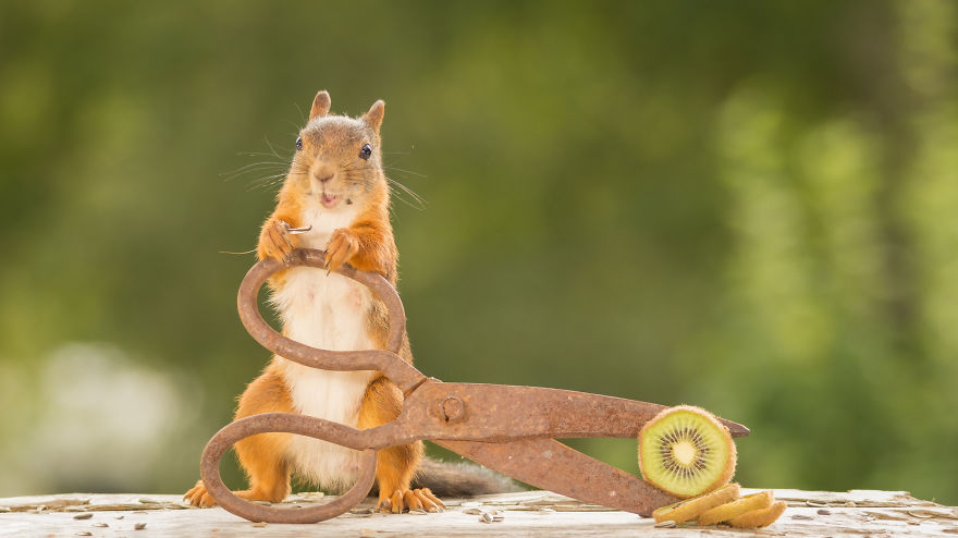 i-shoot-squirrels-in-my-backyard-and-i-can-almost-make-a-living-from-what-i-love-3__880
