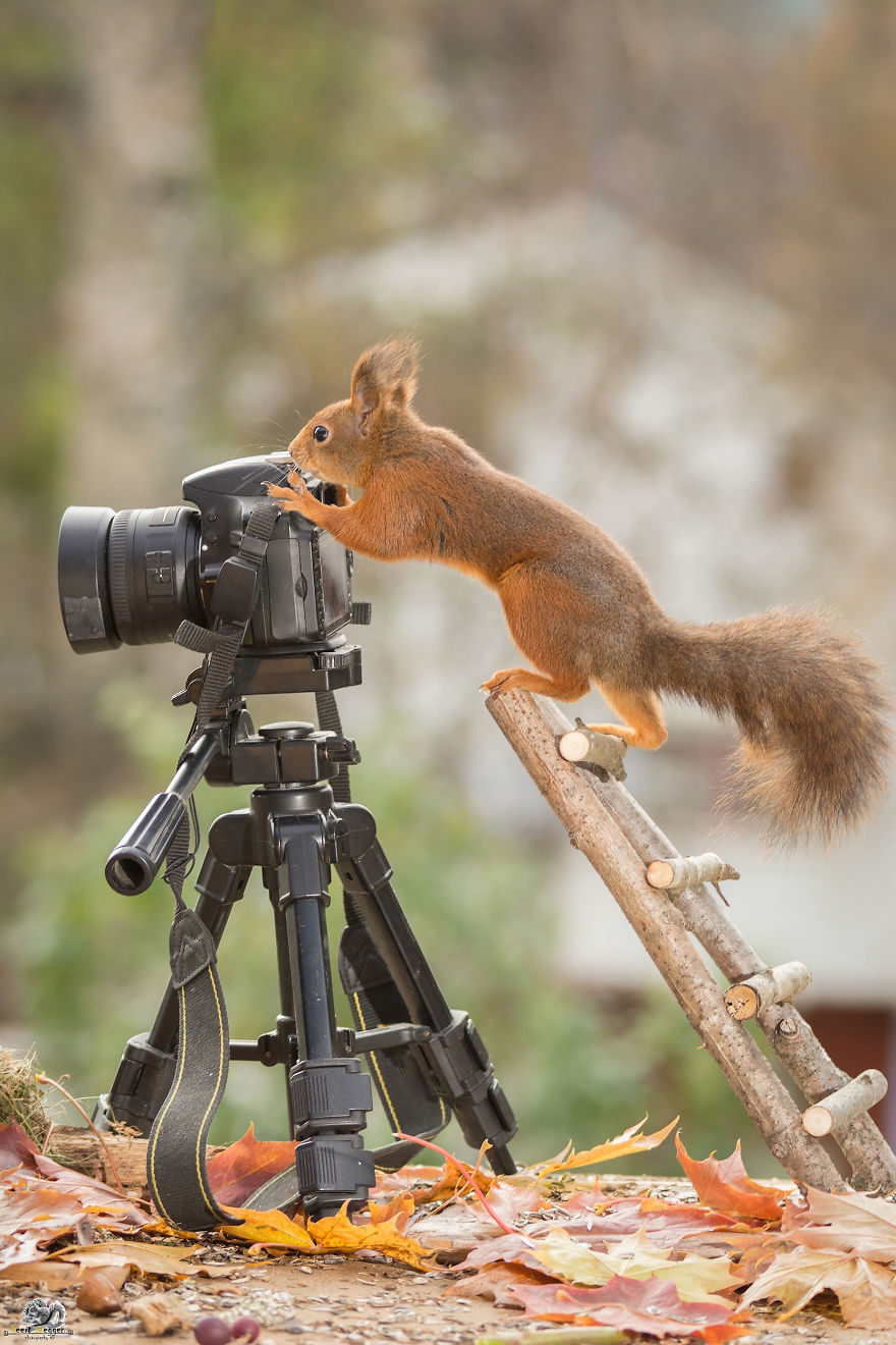 i-shoot-squirrels-in-my-backyard-and-i-can-almost-make-a-living-from-what-i-love-4__880 (1)