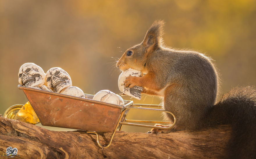 i-shoot-squirrels-in-my-backyard-and-i-can-almost-make-a-living-from-what-i-love-6__880 (1)