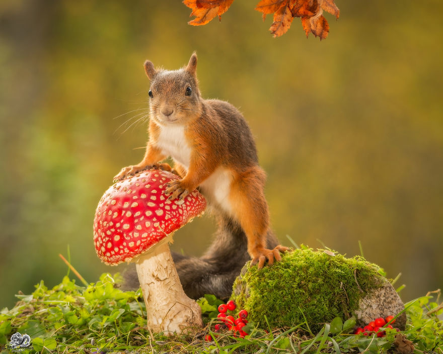 i-shoot-squirrels-in-my-backyard-and-i-can-almost-make-a-living-from-what-i-love-8__880 (1)
