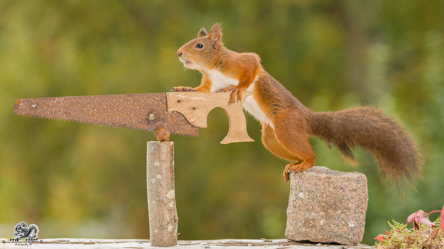 i-shoot-squirrels-in-my-backyard-and-i-can-almost-make-a-living-from-what-i-love-9__880