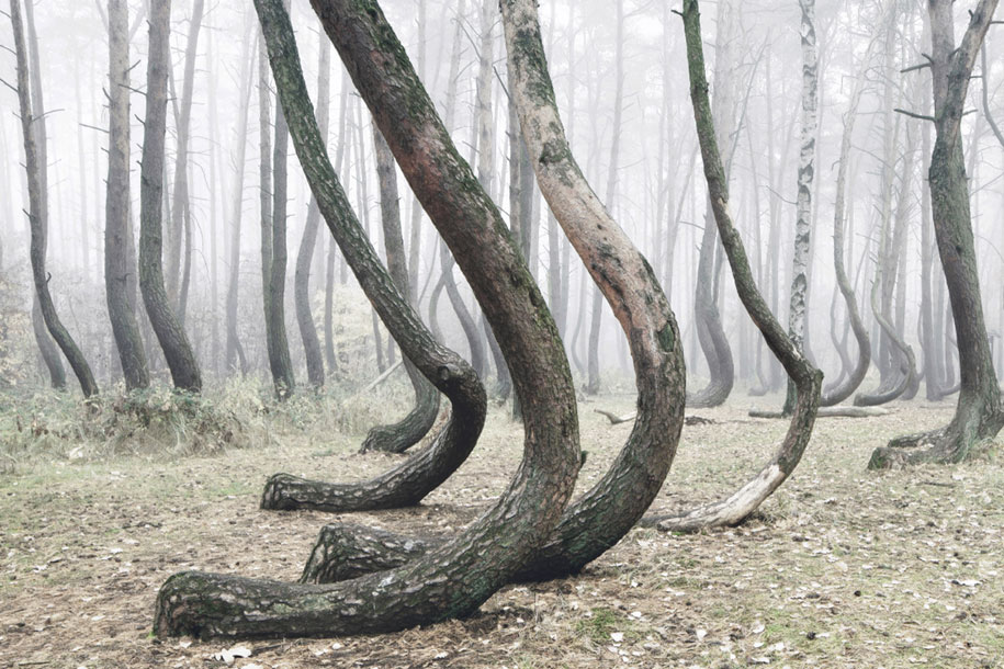 nature-photography-twisted-trees-crooked-forest-kilian-schonberger-8