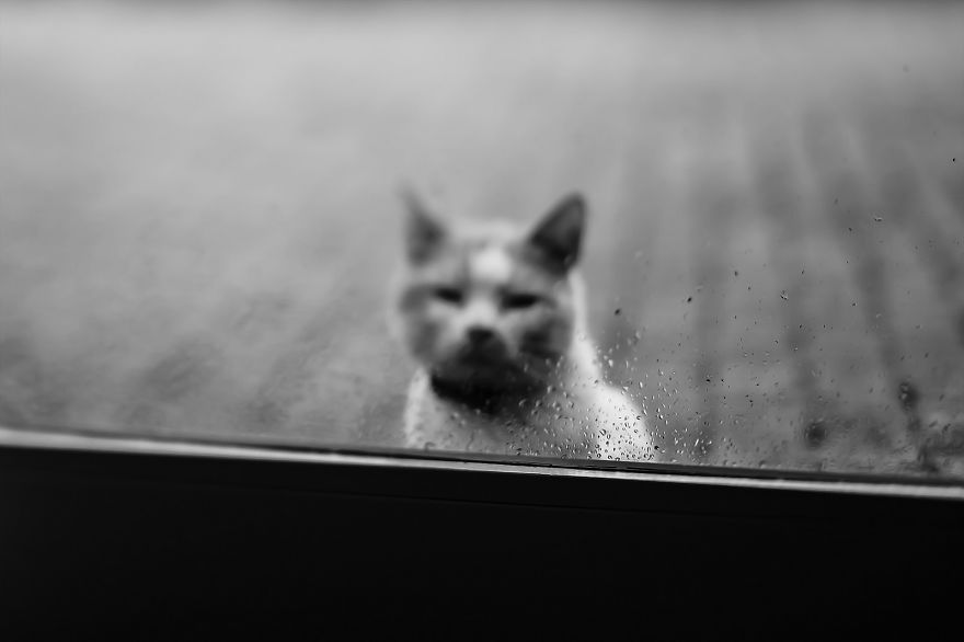 photographing-cats-helps-me-deal-with-my-insecurity-and-dark-past-13__880