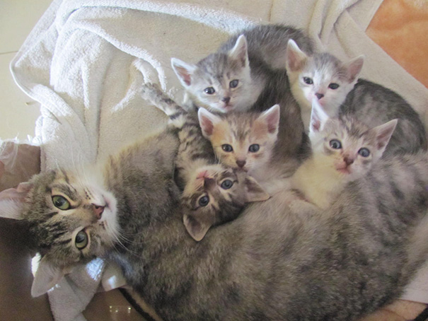 proud-cat-mommies-31__605