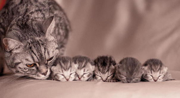 proud-cat-mommies-45__605