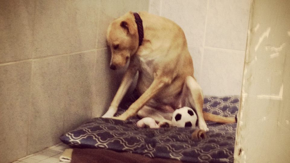 szomoru-kutya