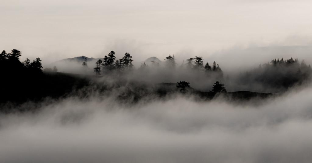 4248136-fog