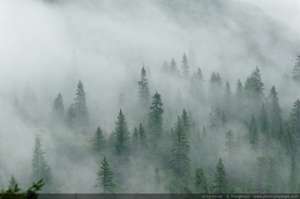 Fog-on-the-forest-in-Yosemite-Valley