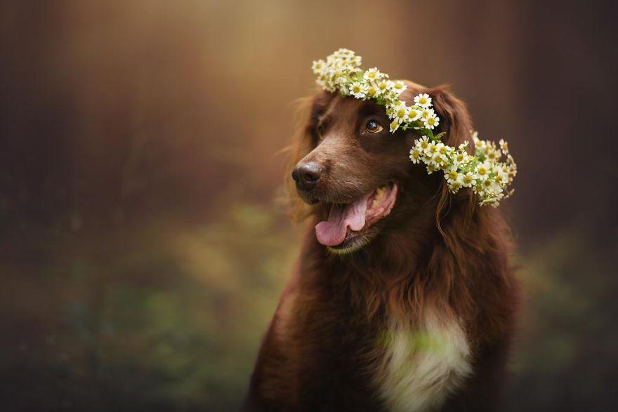 Woman-Creates-Enchanting-Portraits-of-Dogs-in-the-Austrian-Wilderness12__880