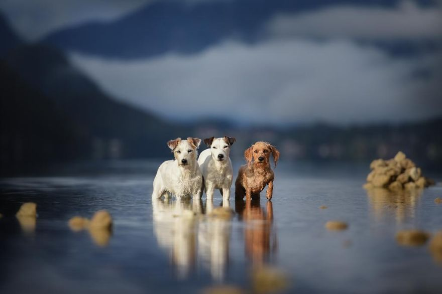 Woman-Creates-Enchanting-Portraits-of-Dogs-in-the-Austrian-Wilderness14__880