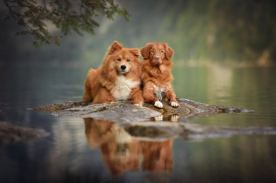 Woman-Creates-Enchanting-Portraits-of-Dogs-in-the-Austrian-Wilderness16__880