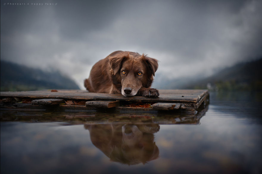Woman-Creates-Enchanting-Portraits-of-Dogs-in-the-Austrian-Wilderness1__880