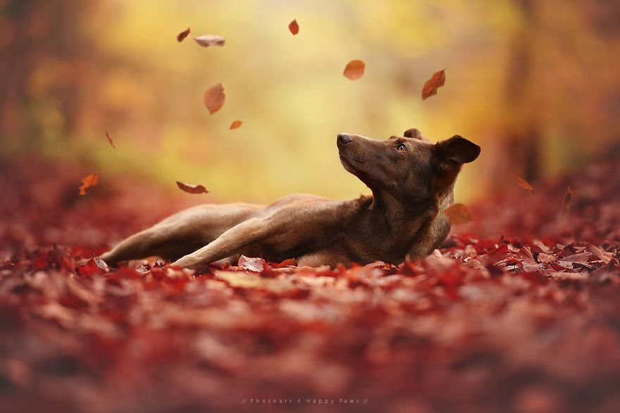 Woman-Creates-Enchanting-Portraits-of-Dogs-in-the-Austrian-Wilderness21__880
