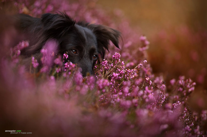 Woman-Creates-Enchanting-Portraits-of-Dogs-in-the-Austrian-Wilderness3__880
