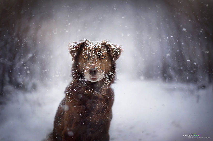 Woman-Creates-Enchanting-Portraits-of-Dogs-in-the-Austrian-Wilderness4__880