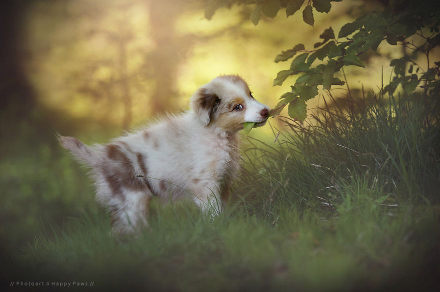 Woman-Creates-Enchanting-Portraits-of-Dogs-in-the-Austrian-Wilderness5__880