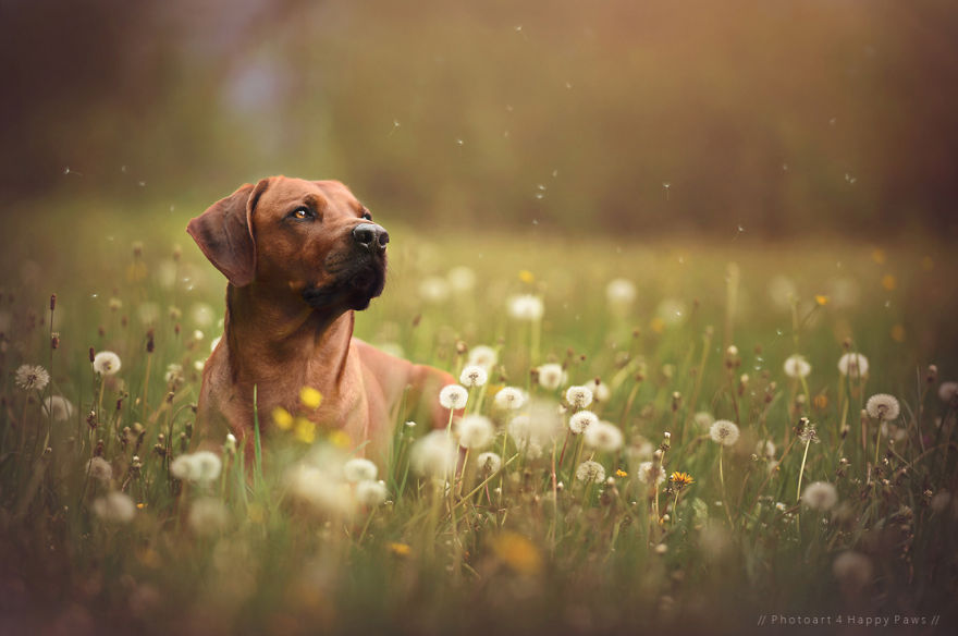 Woman-Creates-Enchanting-Portraits-of-Dogs-in-the-Austrian-Wilderness7__880