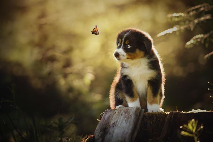 Woman-Creates-Enchanting-Portraits-of-Dogs-in-the-Austrian-Wilderness9__880