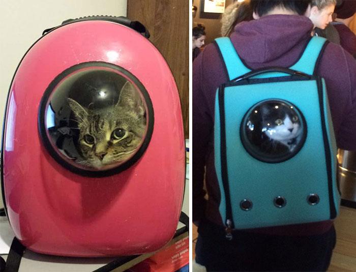 astronaut-pet-bubble-carrier-upet-coverimage