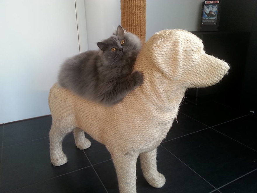 dog-shaped-scratching-post-erik-stehmann-4