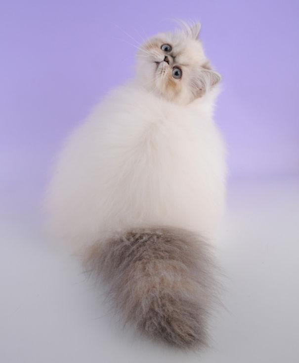 fluffy-cat-funny-pics-26__605