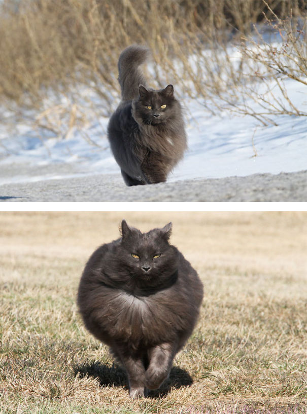fluffy-cats-funny-animal-pics-55__605