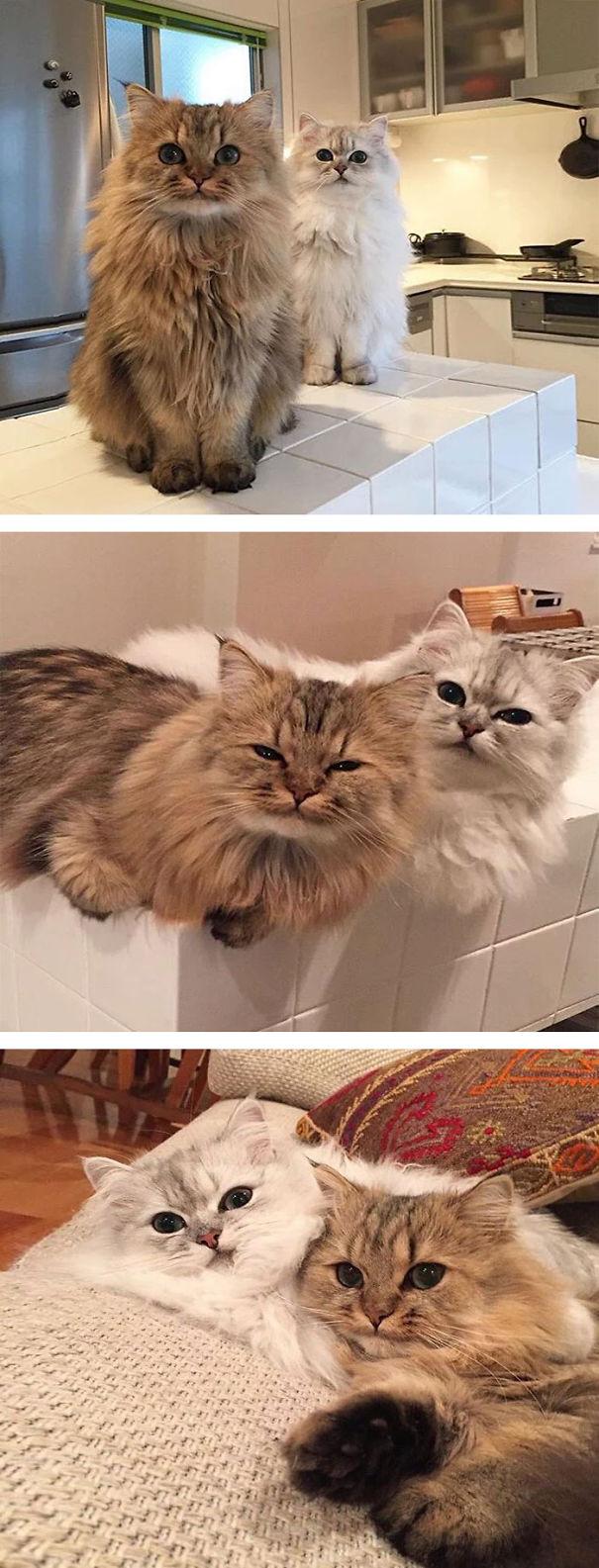 fluffycats194__605