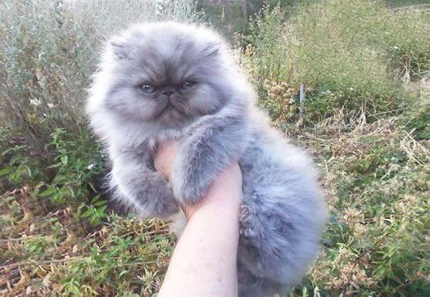 fluffycats311__605
