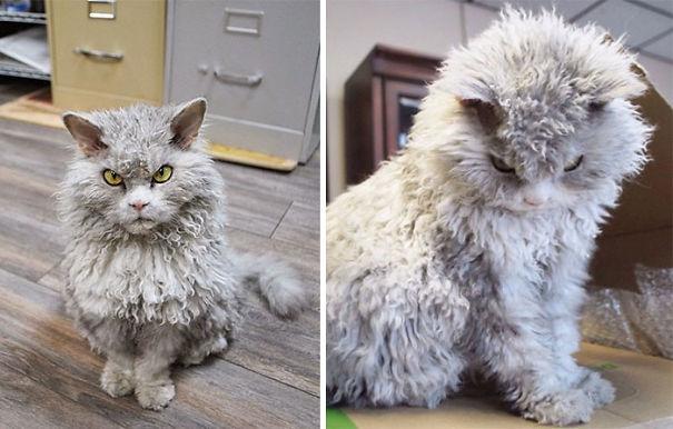 fluffycats361__605
