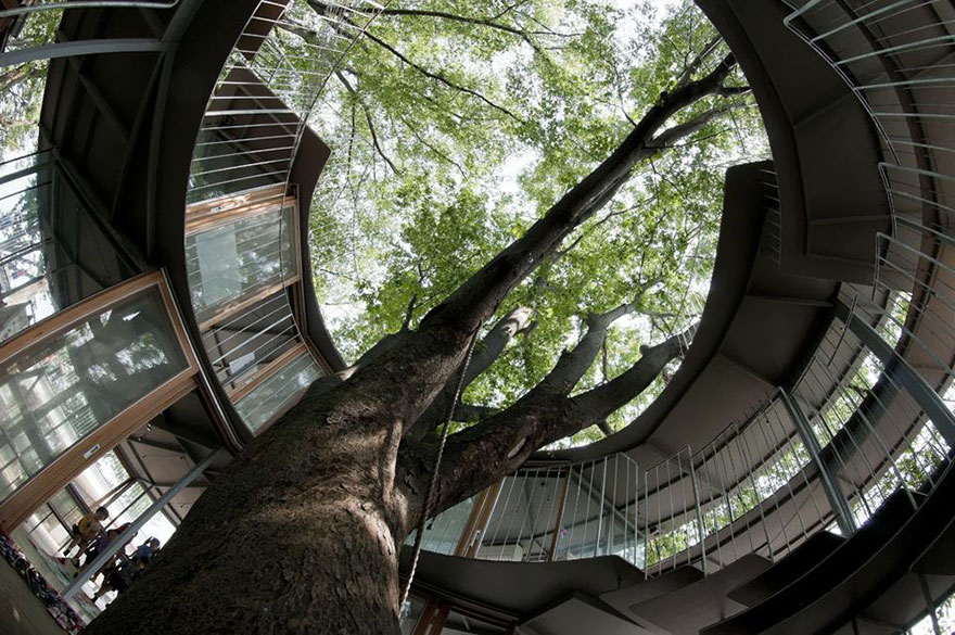 kindergarten-around-tree-zelkova-fuji-tezuka-architects-33