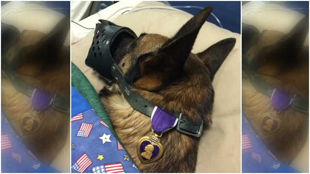prayers for K9 Rocky_1449834671162_607523_ver1.0_1449839507965_607550_ver1.0