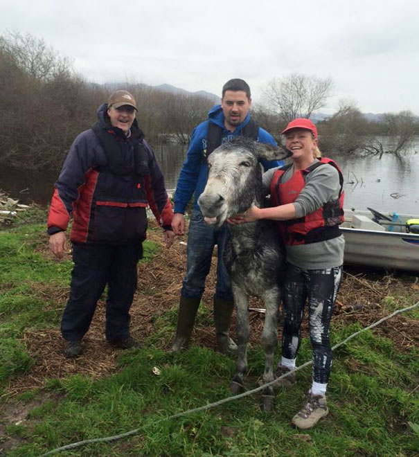 rescued-donkey-smiling-fall-river-flood-mike-ireland-57
