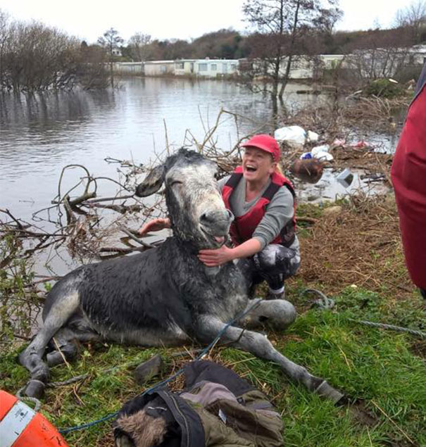 rescued-donkey-smiling-fall-river-flood-mike-ireland-63