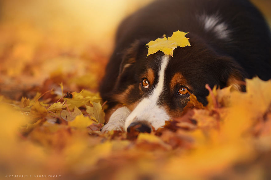 woman-creates-enchanting-portraits-of-dogs-in-the-austrian-wilderness-11__880