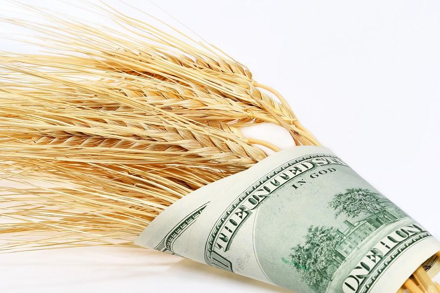 Petrodollár a GMO-s búzánkba?