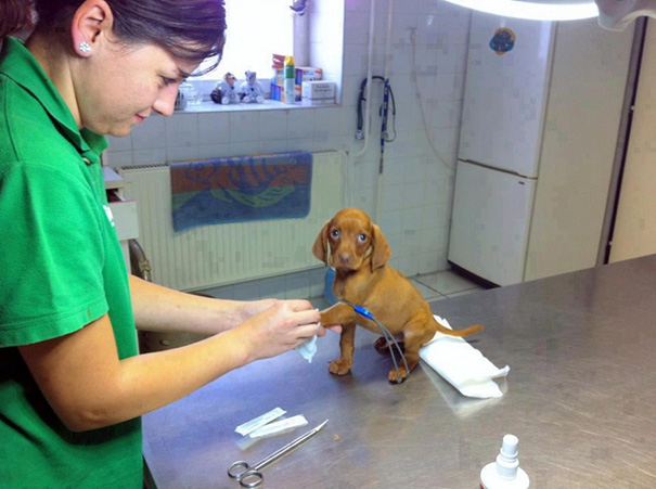 benefits-working-with-animals-at-vet-clinic-161__605