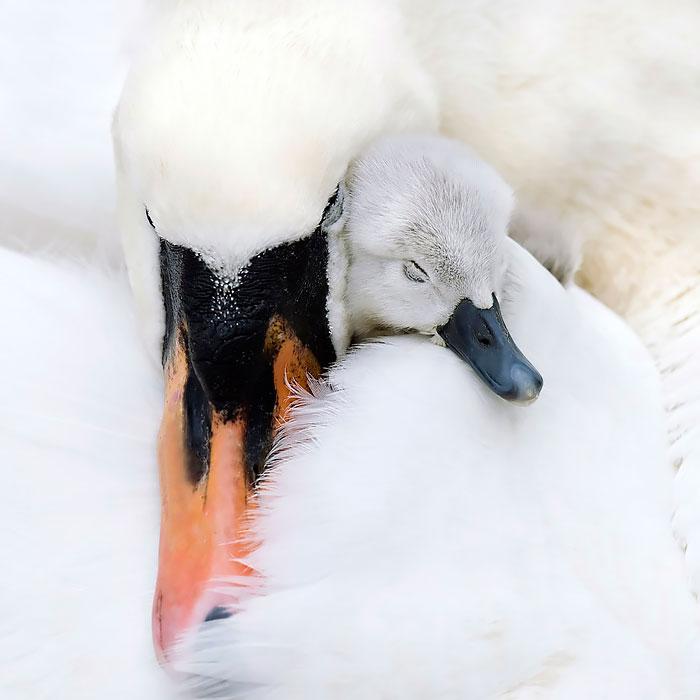 cute-bird-parents-39__700