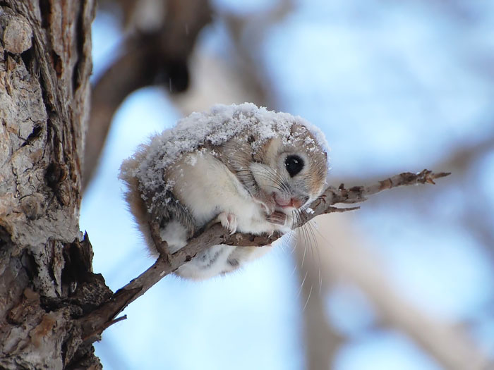 cute-squirrel-photography-121__700