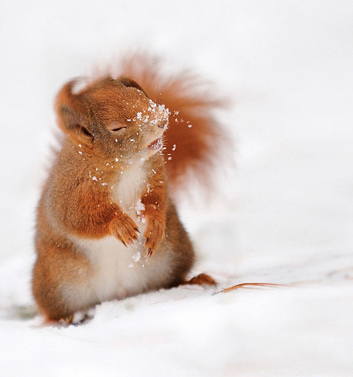 cute-squirrel-photography-131__700