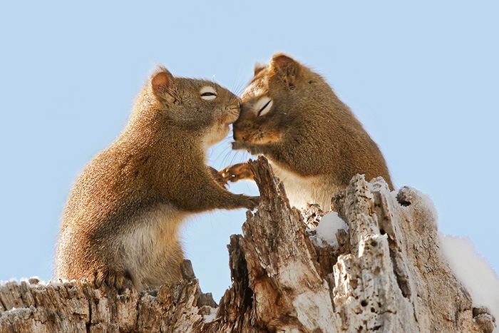 cute-squirrel-photography-23__700