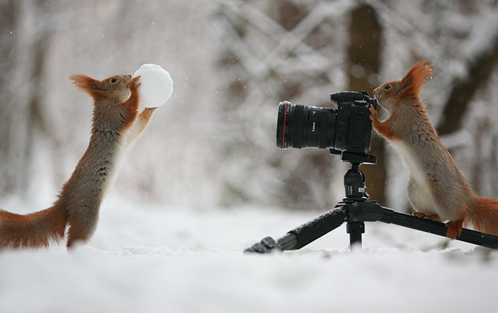 cute-squirrel-photography-30__700
