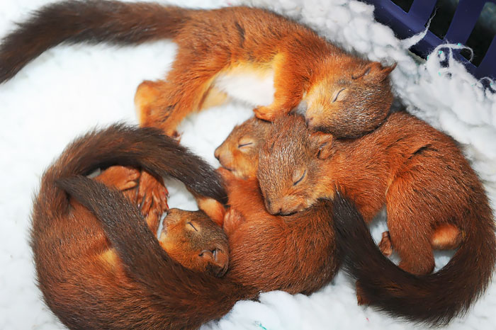 cute-squirrel-photography-40__700