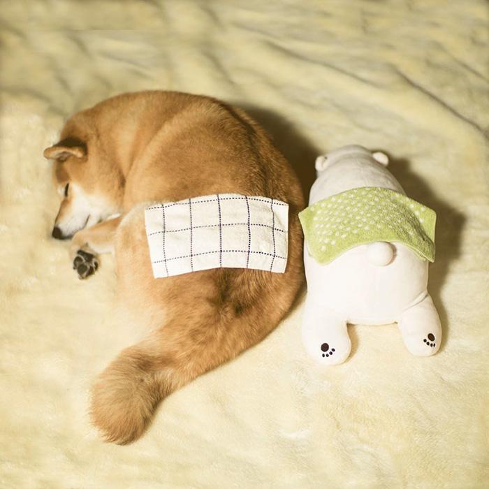 dog-shiba-inu-sleeps-teddy-bear-same-position-maru-6
