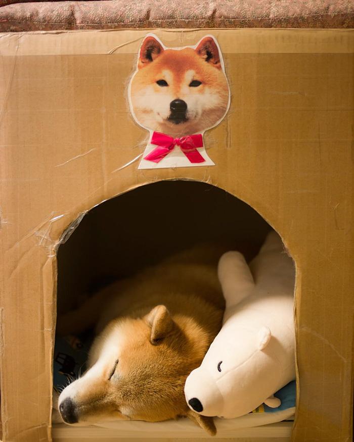 dog-shiba-inu-sleeps-teddy-bear-same-position-maru-9