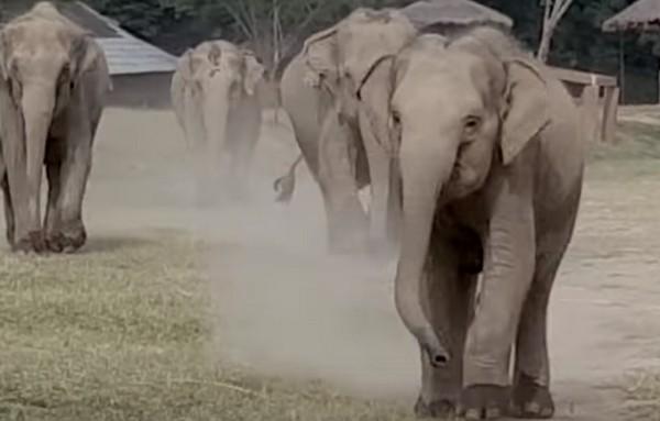 elefántpark1